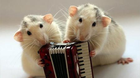 楽器を奏でるネズミたち