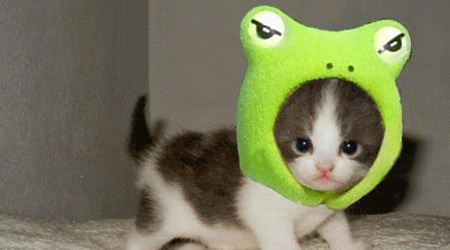 自由気ままな猫たち