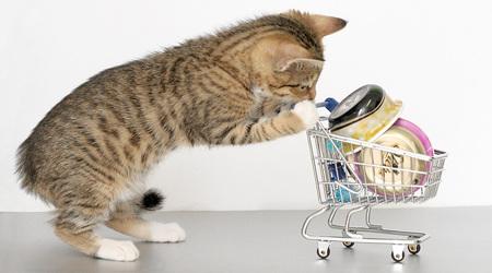 キティのショッピング