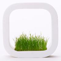 額縁のような植木鉢 – picture