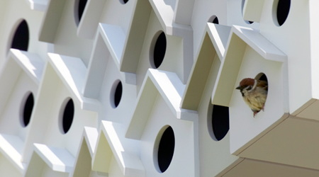 鳥のマンション