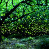 妖精(ホタル)の棲む森