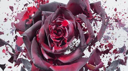 花は散っても美しい