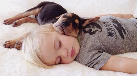 寝るときは、いつもわんこと一緒