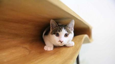 猫の住まうテーブル